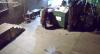 Urso 'ladrão' é flagrado roubando caçamba de lixo nos Estados Unidos
