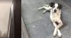 Delegacia de Proteção Animal registra 17 mil denúncias em SP em 2 anos