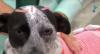 Cachorra que levou um tiro em SP recebe alta e um lar cheio de amor