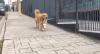Conheça a história da cachorra que busca pães diariamente para seus donos