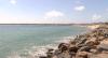 Projeto resgata e trata animais encalhados em praias do Ceará