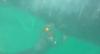 Mergulhadores gravam momento em que salvam baleia jubarte em praia no Peru