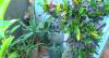 Selvas Urbanas: Paulistanos cobrem a casa de verde