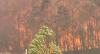 Incêndios destroem florestas e casas na Austrália