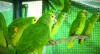 São Paulo tem mais de 500 espécies de aves silvestres