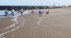 Maia cria CPI para investigar origem de óleo nas praias