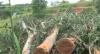 Chuva castiga e causa transtornos em Belo Horizonte