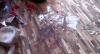 Buquê de flores com bomba deixa mulher ferida em São Paulo