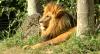 Governo de SP concede Zoo e Jardim Botânico por R$ 111 milhões