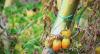 Efeito geada: frutas e legumes estão mais caras em Minas Gerais