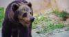 Ursa será transferida para zoológico de São Paulo