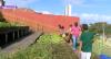 Recife: projeto ajuda alimentar 500 famílias
