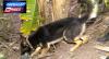 Cães farejadores localizam drogas variadas em favela