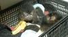 Macaquinhos são resgatados em operação contra o tráfico de animais