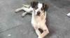 """Sonia Abrão sobre morte de cachorro em supermercado: """"Nojenta e brutal"""""""
