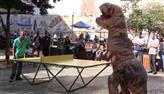 Dino e humano fazem clássico das eras no tênis de mesa