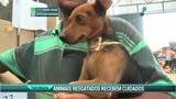 Animais resgatados recebem cuidados em Mariana (MG)