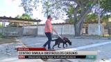 Salvador tem centro especial para treinar c�es-guias