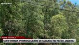 Febre amarela: governo do Rio confirma 1ª morte de macaco