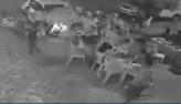 A polícia procura motorista que atropelou um grupo de pessoas, no Pará