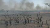 Pantanal: