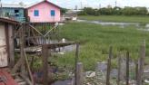 Amazonas tem aumento nos casos de dengue