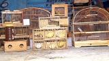 Policiais flagram criminosos que negociavam aves silvestres