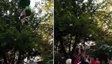 Menina é salva por visitantes após cair de carrinho em parque de diversões