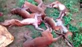 Grupo de 12 macacos é encontrado morto após ataque cardíaco causado por tig