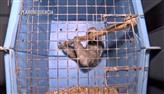 Plano Sequência mostra o que acontece com os animais apreendidos pelo Ibama