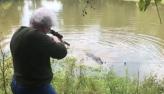 Idosa de 73 anos mata jacaré-americano de 3,6 metros nos EUA