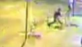 Assaltante armado leva cachorro após roubar mulher em Goiânia