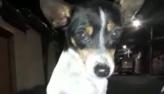 Cãozinho tem final feliz após ser amarrado em lixeira em Belo Horizonte