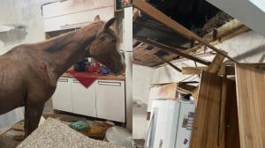 Cavalo cai de telhado e vai parar em cozinha de residência em SP