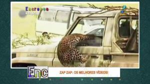 Onça-pintada invade carro e ataca motorista