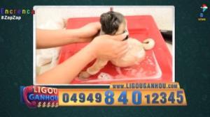 Cachorro toma o banho mais relaxante da história