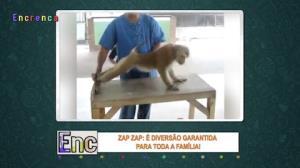 """Macaco """"maromba"""" mostra disposição ao fazer flexões"""