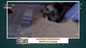 Final feliz! Cachorro é resgatado de dentro de calçada