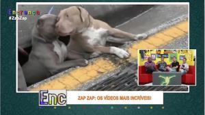 Salvamento emocionante: bombeiros resgatam cachorros de bueiro
