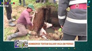 Bombeiros usam pequeno guindaste para salvar vaca de buraco
