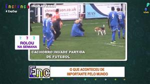 Cão invade campo no meio de partida de futebol
