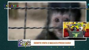 Dennys vai conhecer o macaco Dudu e até entra na jaula dos animais