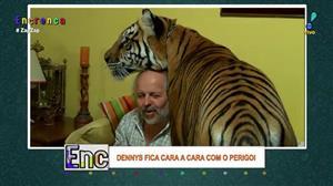 Dennys conhece tigre que mora dentro da casa de um homem