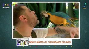 Dennys invade jaulas e mostra curiosidades das aves