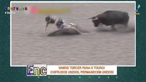 Veja momentos impressionantes de chifradas de touro