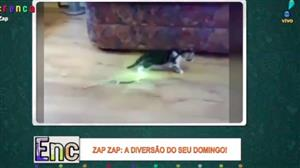 """Lagarto """"jedi"""" bota pra correr gato folgado"""