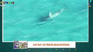 Confira o flagra incrível da luta entre tubarões