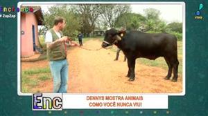 Dennys vai conhecer o exótico búfalo indiano