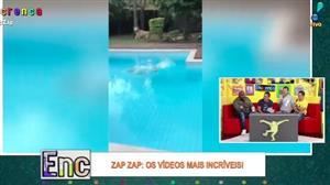 Novo cachorro de Tatola se irrita com 'companheiro' e se joga na piscina