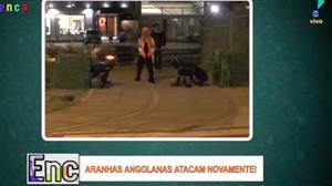 """""""Aranhas angolanas"""" voltam a atacar"""